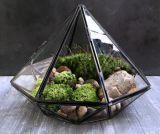 Carcaça de vidro geométrica do Terrarium da solda do preto local dos tirano para o musgo das plantas