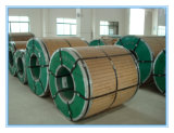 Steel inoxidable Coil Manufacturer 304, 316L, 321, 2205