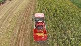 Mini liga do milho Máquina da colheita