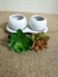 Piante e fiori artificiali della pianta succulente Gu60747178