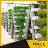 최신 판매 농업을%s 상업적인 수경법 온실