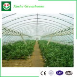 Vegatableを植えるための農業のMultispanのフィルムの温室