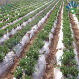 2% -3% Resistência UV Proteja a tampa da planta / cobertura do solo / Agricultura Tecido não tecido