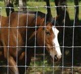 販売のための金属によって電流を通される金網のCattelの馬の塀