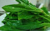 Машина чистки пузыря для густолиственного Овощ-Spinacia Oleracea