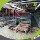 O MERGULHO quente do equipamento dos rebanhos animais galvanizou a tenda da gestação do porco para a venda