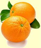 Zitrusfrucht Aurantium Auszug mit Synephrine und Hesperidin