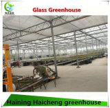 Casa verde de vidro hidropónica comercial de Multispan para a framboesa
