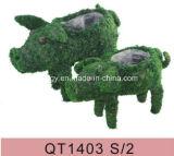 حارّ بائعة طحلب مزارع [هندووفن] حيوانيّ