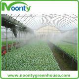 Galvanisiertes Stahllandwirtschafts-grünes Haus für die Tomate, die mit Plastikfilm-Bedeckung wächst