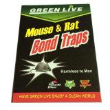 Presa della colla del ratto di alta qualità con il prezzo più basso