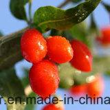 De Bes van Himalayan Goji van de Natuurlijke voeding van de mispel