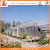 花のための農業か商業ポリエチレンフィルムの庭の温室