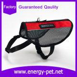 O produto reflexivo do animal de estimação do engranzamento do cão da segurança investe o chicote de fios