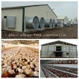 Chambre de ferme de poulet de structure métallique pour la ferme moderne