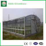 Парник Venlo Multi-Пяди земледелия стеклянный для Hydroponic растущий системы