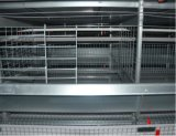 Gaiolas automáticas de venda quentes da galinha/pássaro da exploração avícola da alta qualidade para a galinha da camada (tipo frame de H)