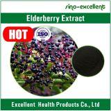 Естественный порошок выдержки Elderberry выдержки