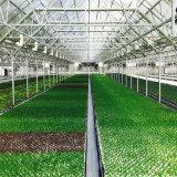 야채와 꽃 성장하고 있는을%s 중국 온실