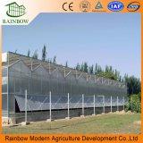 Invernadero económico de hoja PC para cultivo agrícola