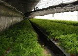 Pano de sombra agrícola para aquicultura e plantas