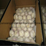 Het Chinese Verse Karton van het Knoflook 500g*20bags/10kg (rood knoflook)
