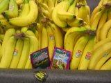 バナナによってUnigrowの扱われる微生物有機肥料