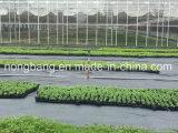 [غود قوليتي] أرض تغطية لأنّ زراعة