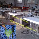 Automatische Blaubeere-sortierende Maschinen-Blaubeere-ordnende Zeile