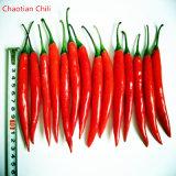 Чили Yidu