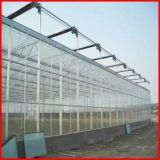 Invernadero de cristal de la agricultura de Venlo del surtidor de China para la venta