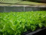 AC100-240V LED는 관상 식물을%s 가벼운 관을 증가한다