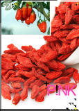 Native Ningxia Organic Goji Berry製造者2016 New Corp
