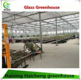 Venlo Typ Glasgewächshaus für Gemüse