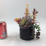 Il Succulent artificiale fiorisce i bonsai della decorazione