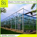 Fiori redditizi/serra di vetro agricola