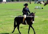 Никель сплава цинка или покрынные кромом шпоры модельное Dph-27 лошади