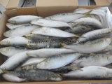 Prix usine congelé chinois de sardine