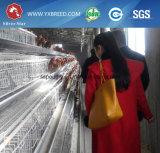 10, клетка 000 птиц цыпленка используемая для фермы Замбии Нигерии (A-3L90)