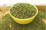 Feijão de Mung do verde da fábrica de 2015 colheitas