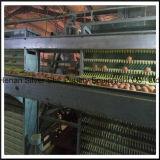 Tipo 5 gaiola do alimentador H do equipamento das aves domésticas da galinha da camada das séries