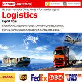 Transporte Agent/Freight Forwarder/Logistics From China a Logistics Mundial