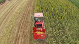 Low Grain Seed Loss for Three Rows Maize Combine Harvesting Machinery