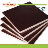 ポプラまたは堅材の黒いブラウンのフィルムは合板または海洋の合板または具体的な閉める型枠の合板に直面した