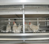 Реактор-размножител Chicken Cage Hen и Male Chicken (рамка h)