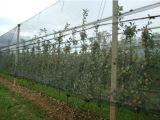 Анти- сеть птицы насекомого для лоз виноградины