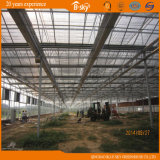 Обширно Used Beautiful Glass Greenhouse с Venlo Structure