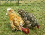 """1/2 """", 3/8 di """", 1 """" rete metallica rivestita del pollo del vinile/rete metallica esagonale"""
