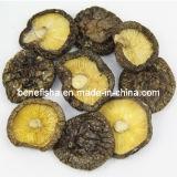 Superfície do preto do cogumelo secado (grossos médios)
