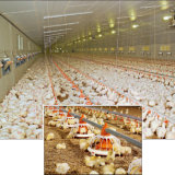 Set pieno Automatic Poultry Farm Machinery per Broiler